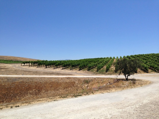 vineyard sb
